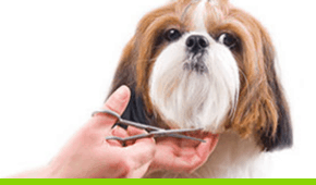 pet travel services
