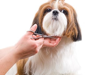 Grooming is available with our parent company.