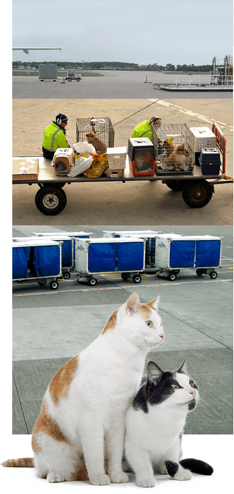 cat travel services